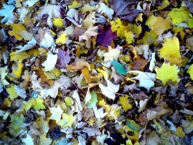 hojas-caidas-otono